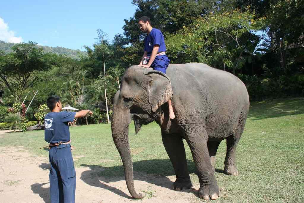 Elephant Camp, Chiang May - by Visnu Pitiyanuvath - visnup:Flickr