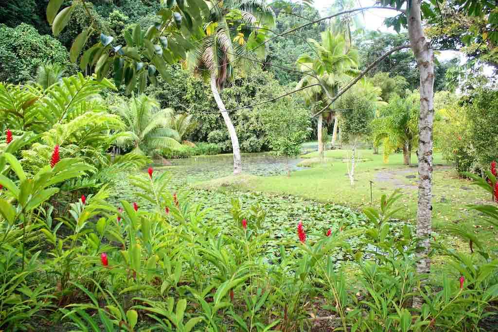 Vaipahi Gardens, Tahiti - by dany13:Flickr