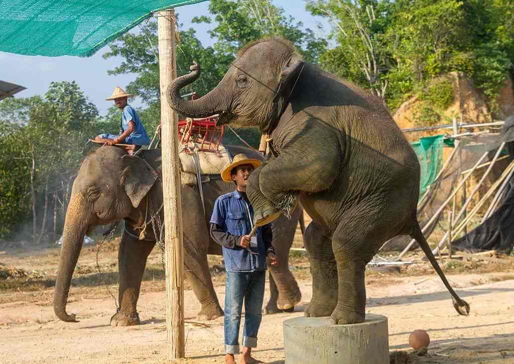 Elephant sanctuary, Krabi -By Maksym KozlenkoWikimedia commons