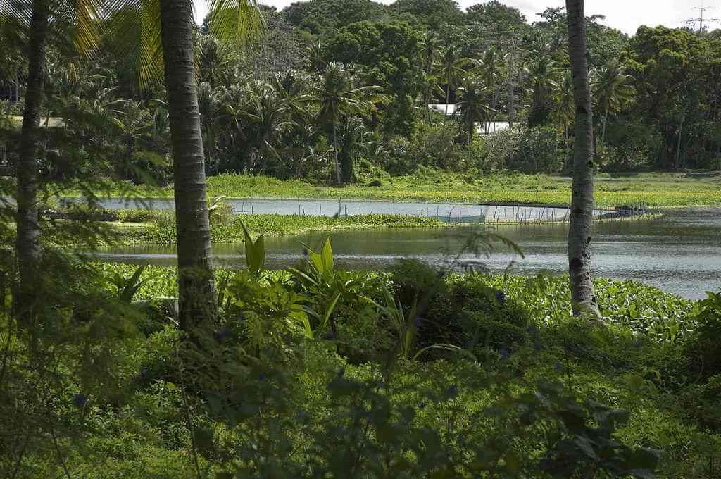Buada Lagoon, Nauru - by Lorrie Graham / wikimediacommons.com