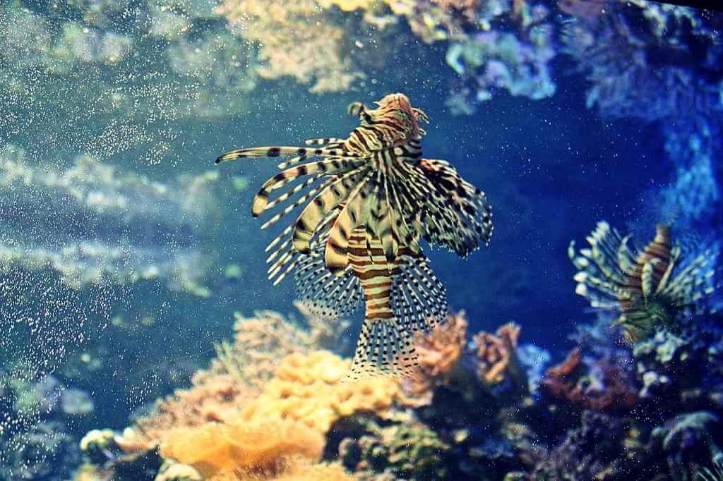 Coral Reef, Nauru - by Olle August / pixabay.com