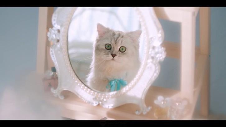 냥덕은 이리오시오! 《러브앤프로듀서》 일본판, 정식서비스 오는 7월 3일로 결정 및 냥덕 겨냥 PV공개