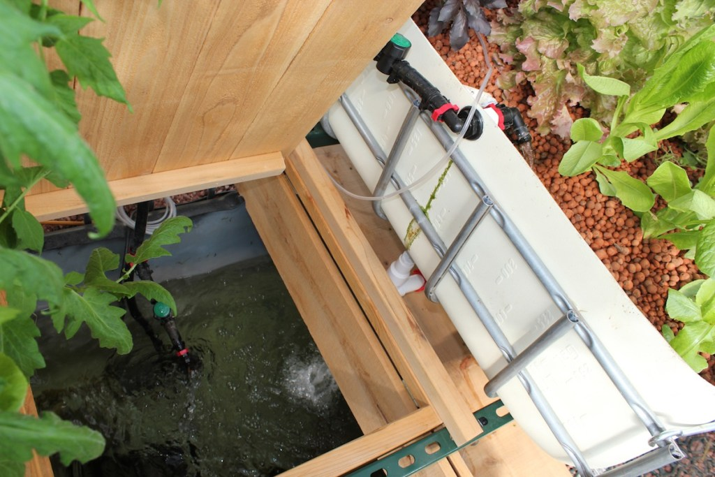 The base of Christine Faith's aquaponic system.