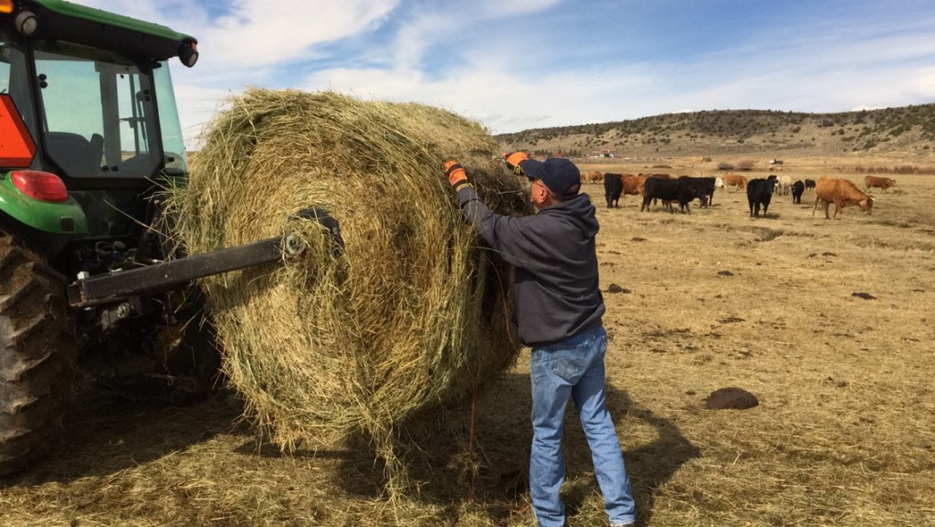Jerry Gallegos unloads hay to feed his cattle.