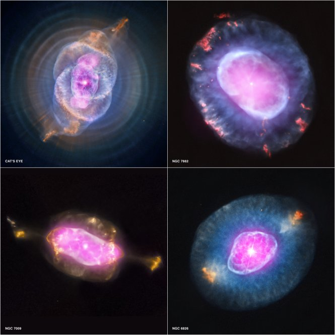 What might appear to be 'space seeds' blooming are in fact planetary nebulas. A planetary nebula represents a phase of stellar evolution that our sun should experience several billion years from now.