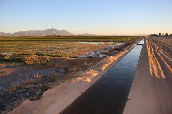 Water from the Colorado River flows through an irrigation canal at an alfalfa farm near Eloy, Arizona.