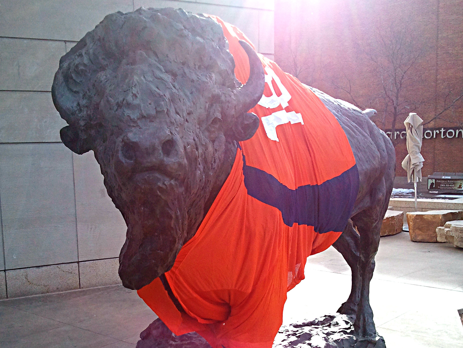 <p>The bison in front of History Colorado in Denver sports a staff-made Broncos jersey.</p>