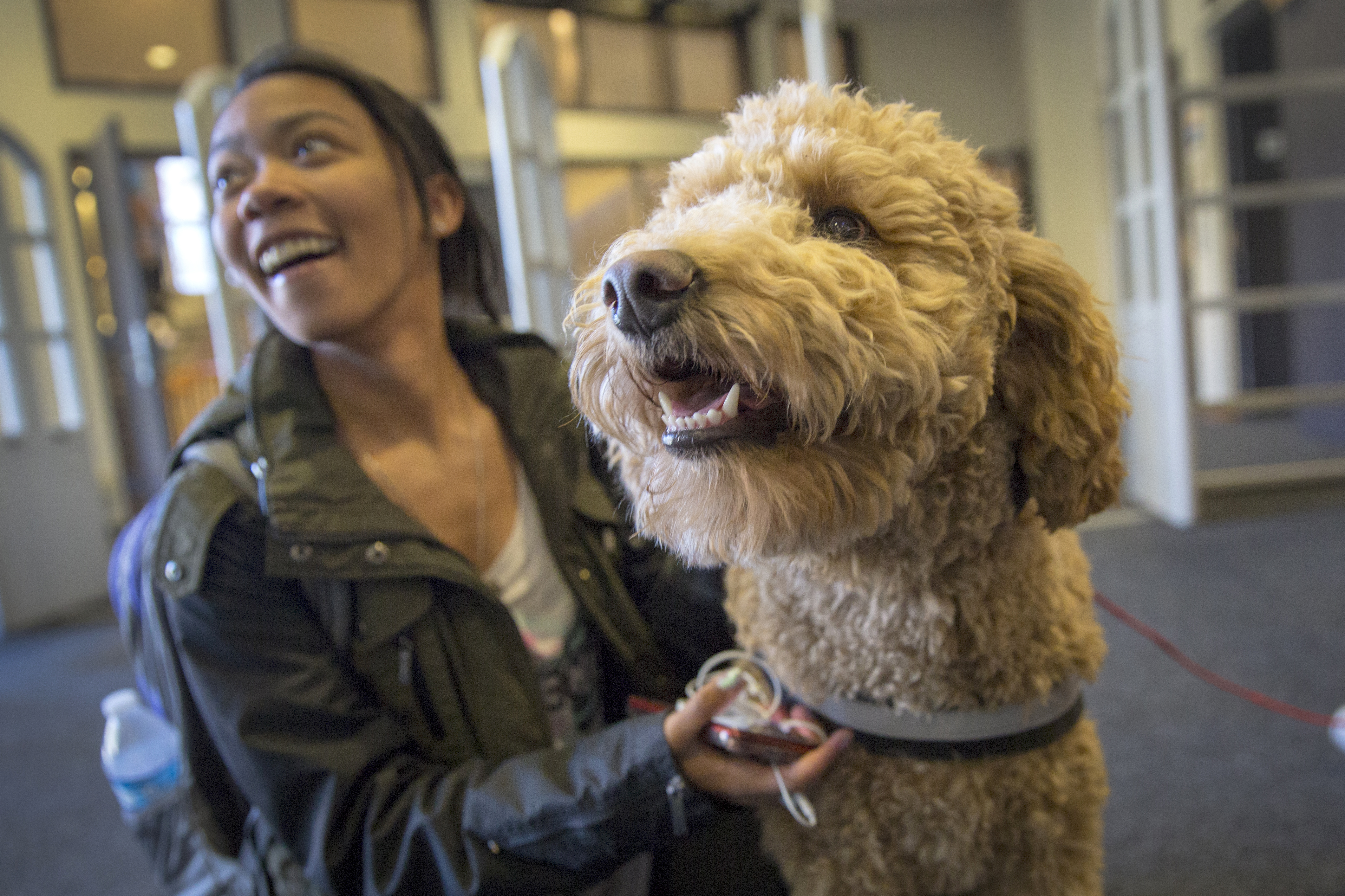 <p>Toby the therapy dog with students at CU Boulder's NorlinLibrary Commons on Tuesday Dec. 11, 2018.</p>