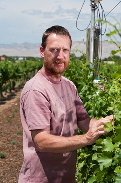 <p>Colorado State viticulturist Horst Caspari studies the vines before phylloxera made an appearance.</p>