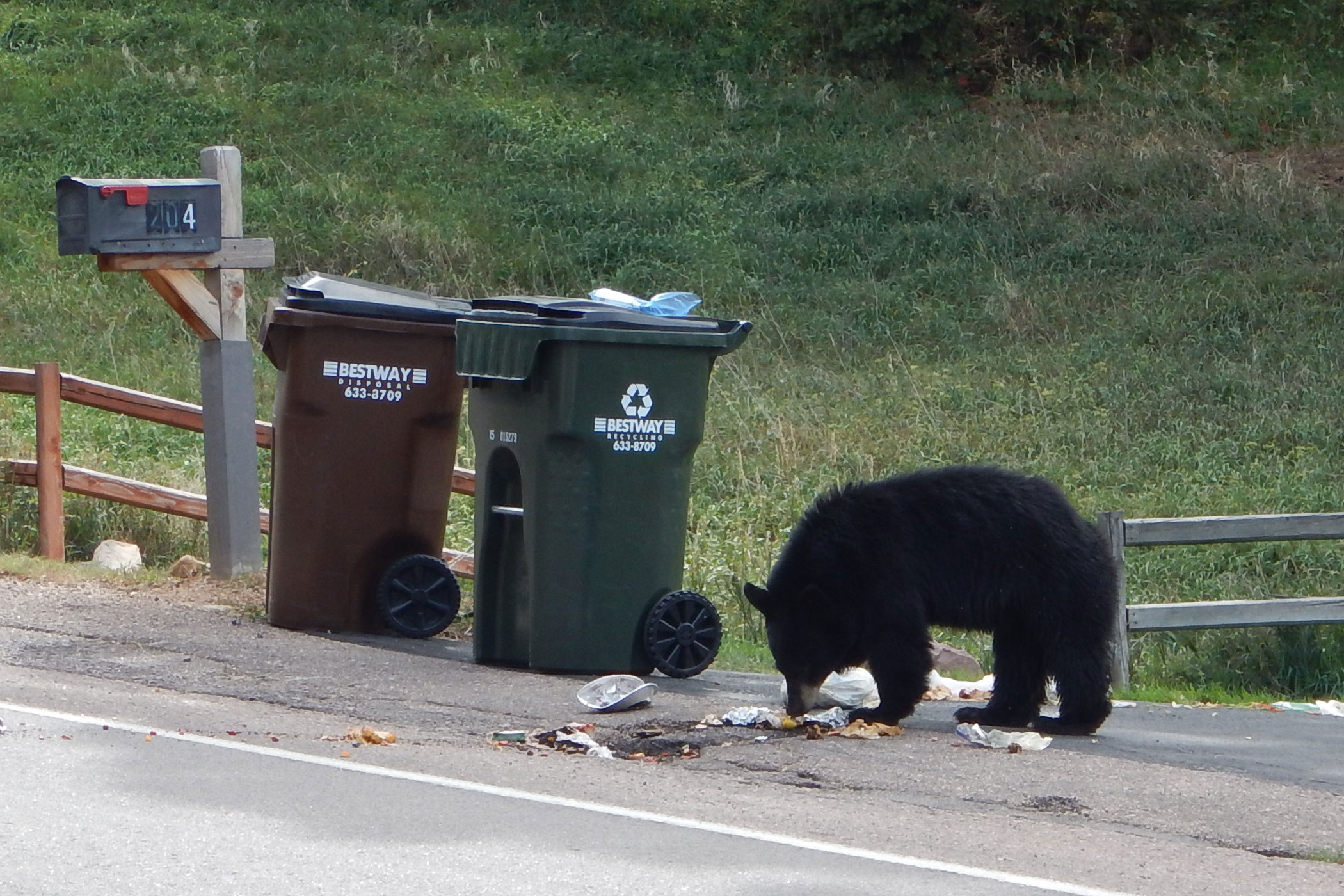 <p>In 2018, wildlife officials euthanized 116 bears across the state.</p>