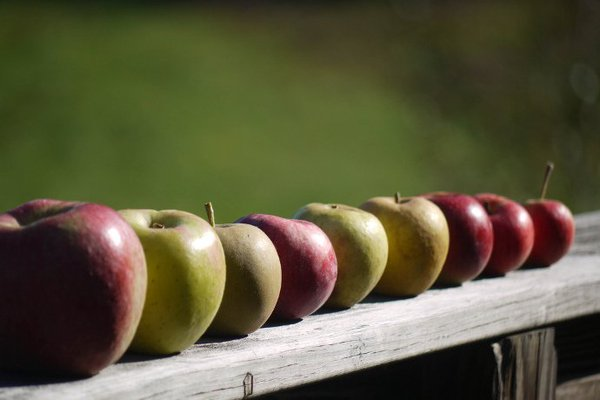 """Hard cider apples, or """"spitters,"""" as they are known in the cider industry."""