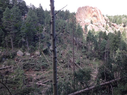 """<p><span style=""""color: rgb(64, 69, 64); line-height: 30.0000591278076px;"""">A tornado downed trees in Pike National Forest Tuesday afternoon, closing the Devils Head trail area.</span></p>"""