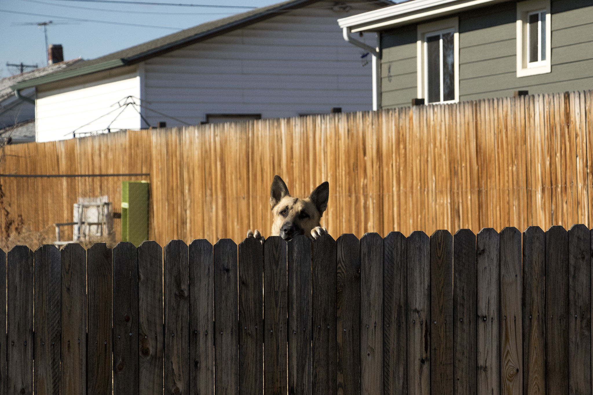 A dog peeks over the fence in Globeville, Nov. 29, 2018.