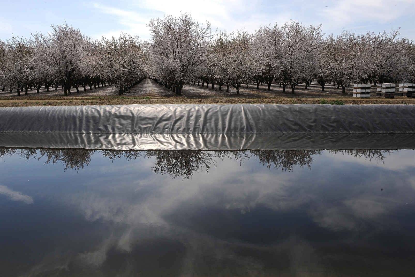 almond-orchard