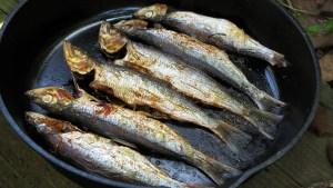 herring_edited