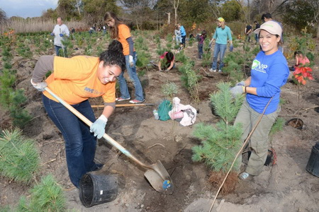 Million Trees NYC Volunteers in Action City of New York