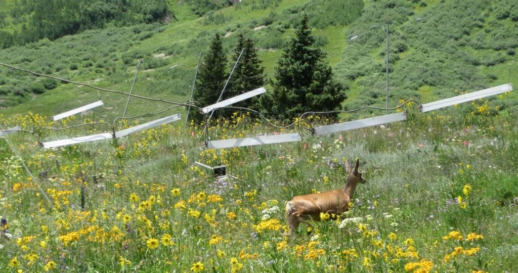 Researchers have been warming this meadow in northwest Colorado for the last 30 years to simulate climate change.