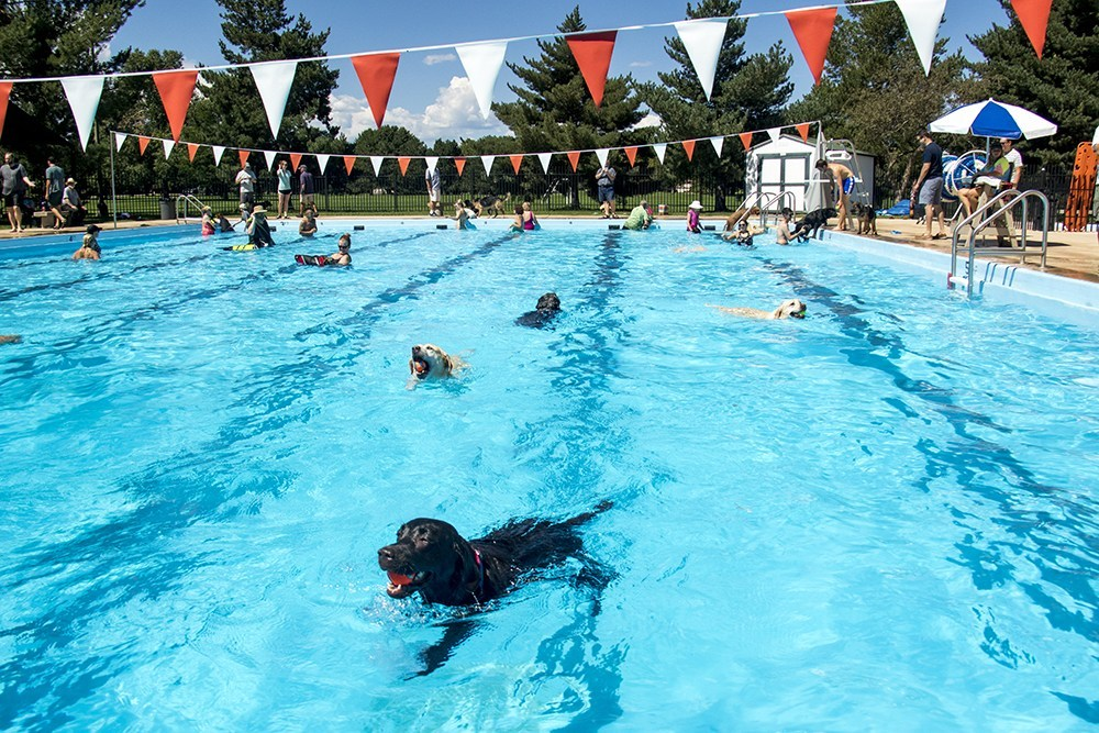 Dogs need to cool off, too.  (Kevin J. Beaty/Denverite)