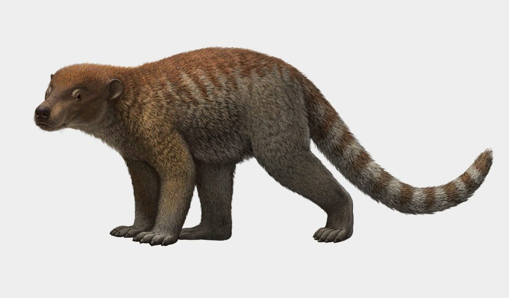 Artist rendering of Loxolophus