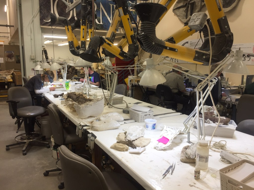 One of the fossil preparation labs at the Denver Museum of Nature and Science
