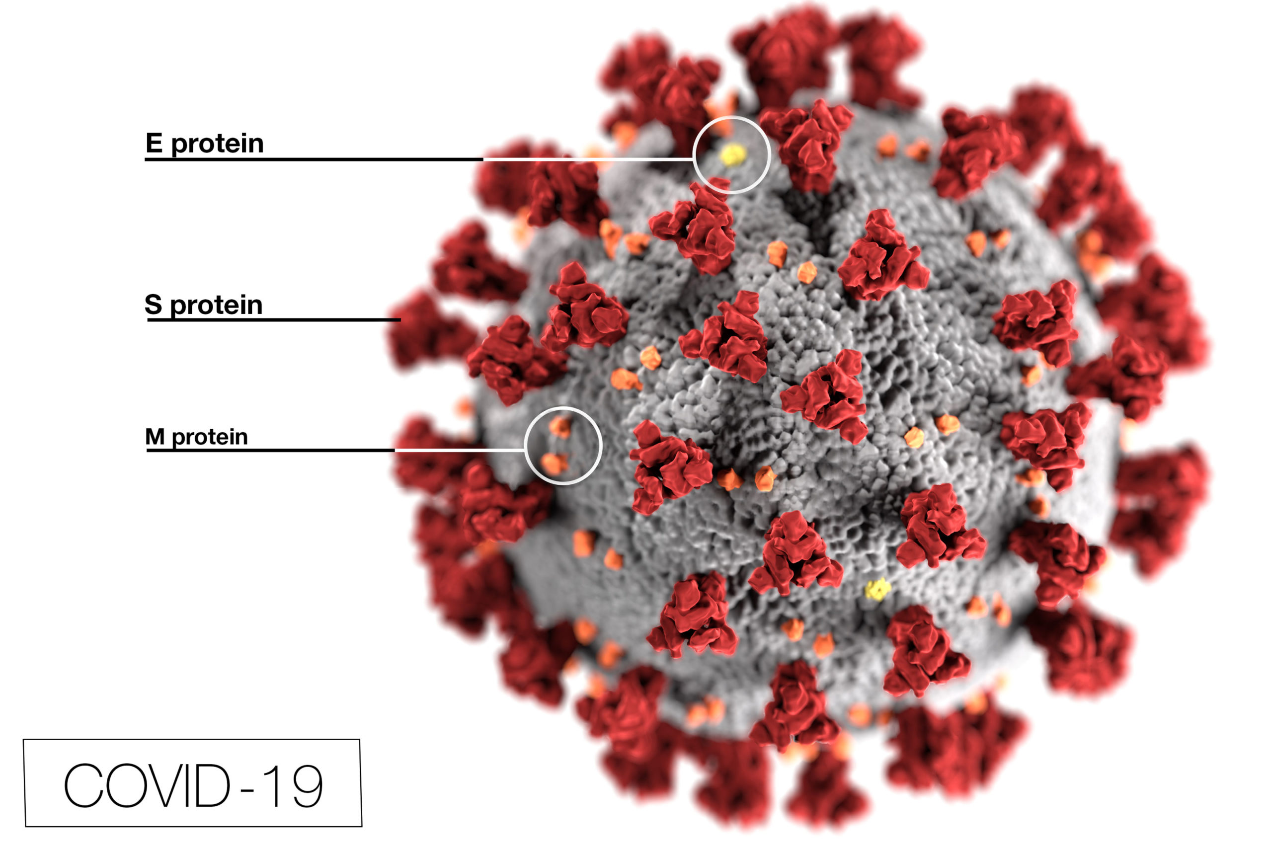 This illustration, created at the Centers for Disease Control and Prevention, reveals ultrastructural morphology exhibited by coronaviruses. Note the spikes that adorn the outer surface of the virus, which impart the look of a corona surrounding the virion, when viewed electron microscopically.