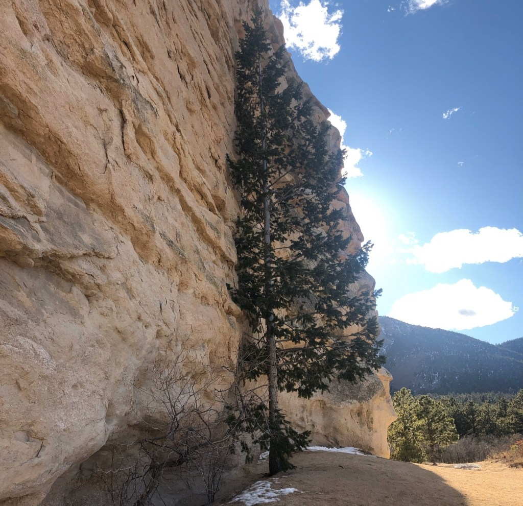 A large rock wall on the left is bordered by a sunny sky and a large tree.
