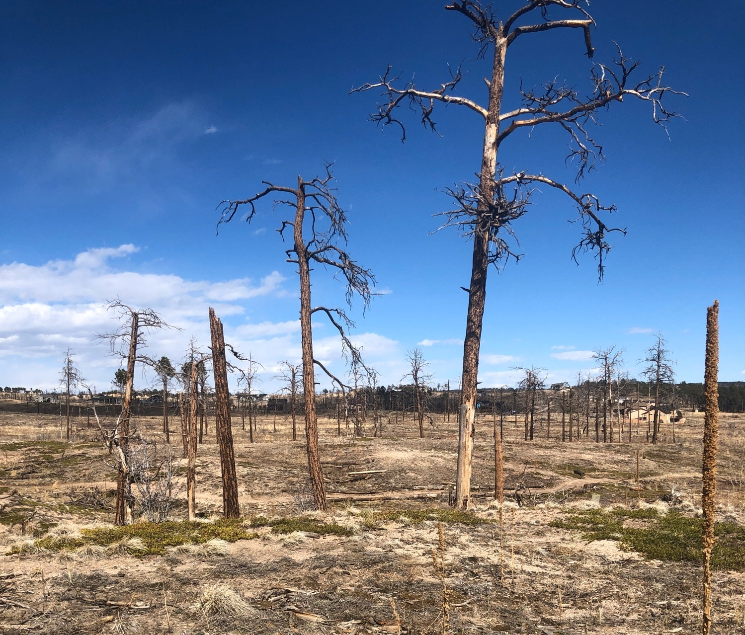 A wildfire in 2014 changed the landscape of Black Forest Regional Park.