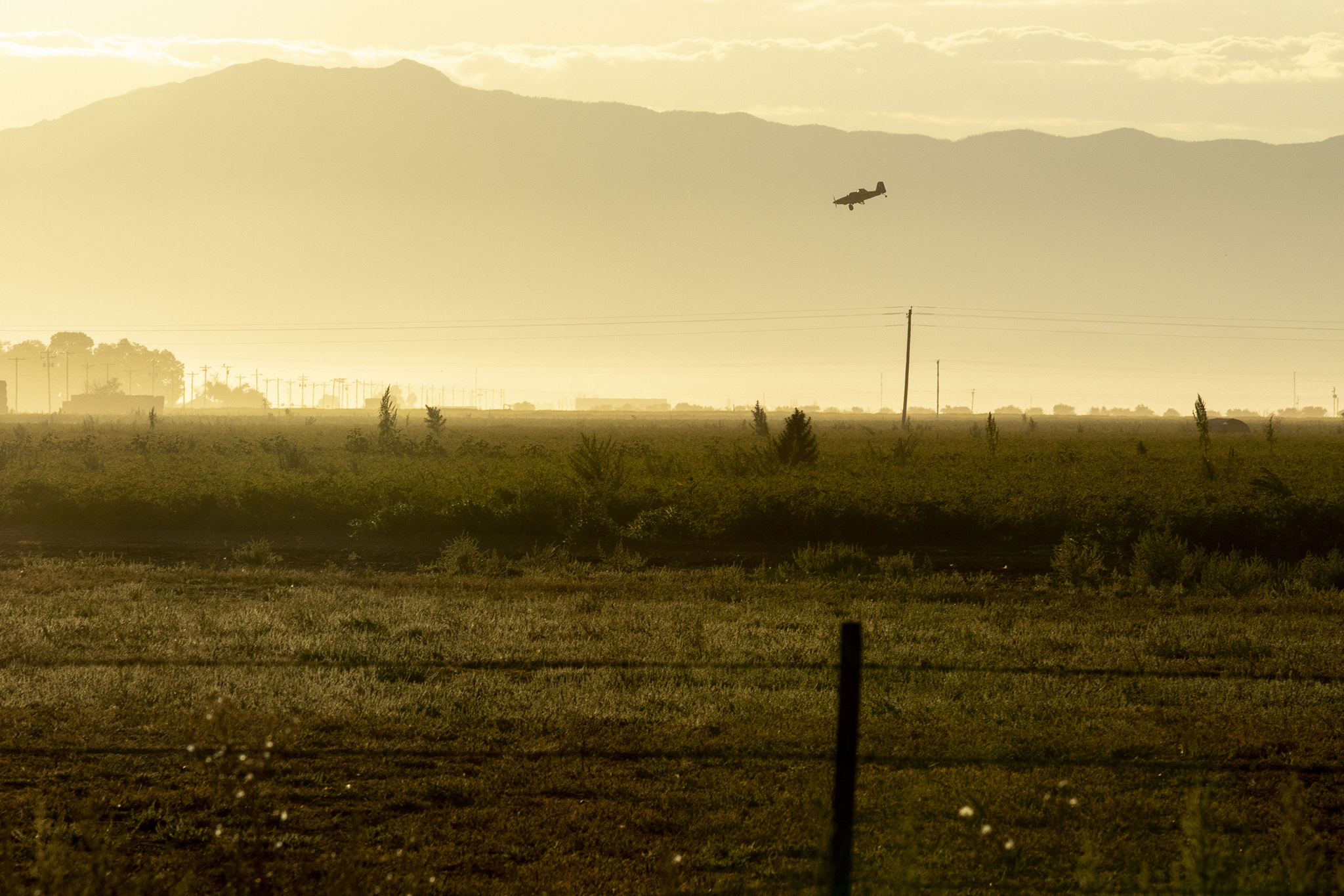A crop duster flies over one of Dave Warsh's fields in the San Luis Valley town of Center. Aug. 26, 2021.