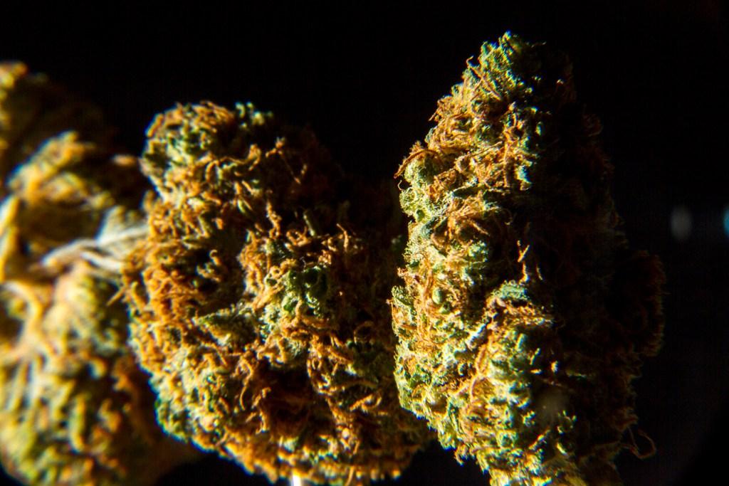 Denver's latest cash crop. (Kevin J. Beaty/Denverite)  marijuana; pot; weed; denver; colorado; denverite; kevinjbeaty;
