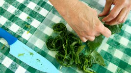 Nivia Fernandez prepares greens freshly plucked from Denver Botanic Gardens' Chatfield farm. (Kevin J. Beaty/Denverite)