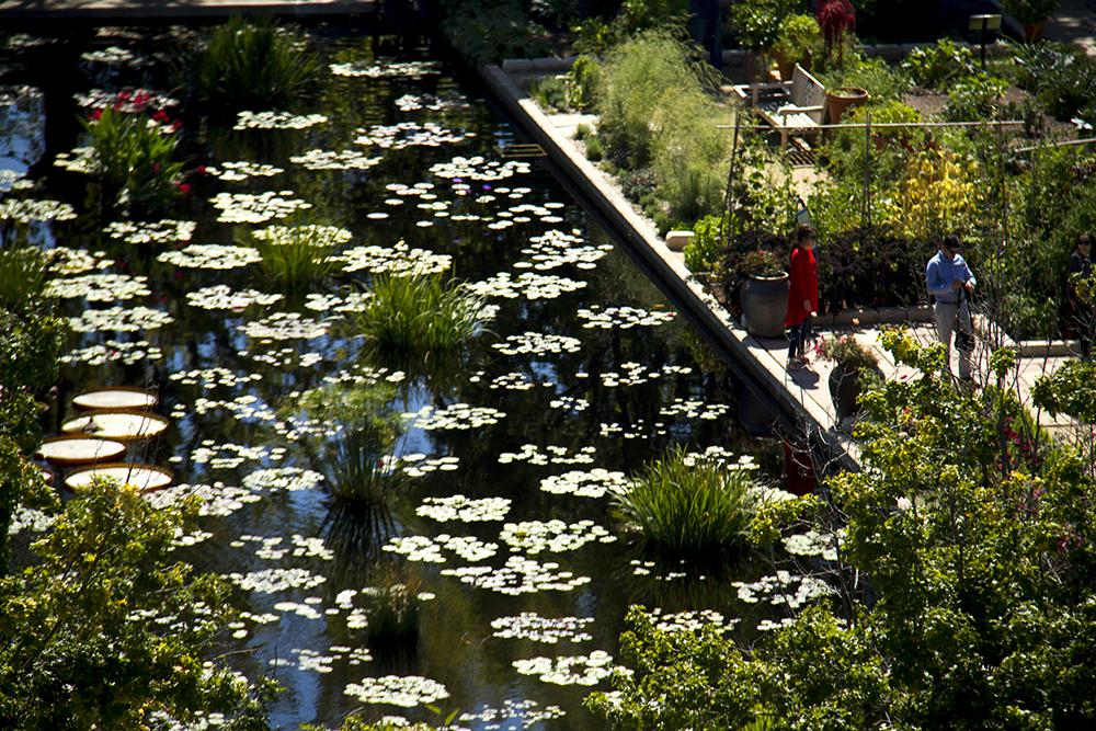 Denver Botanic Gardens Raises Ticket Prices For The First Time In Over 10 Years Denverite The Denver Site