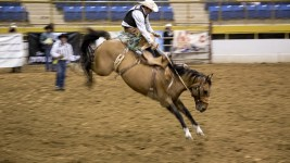 Shae Finigan at the CPRA rodeo Finals at the National Western Complex. (Chloe Aiello/Denverite)