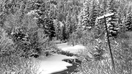 Snow covers the banks of a creek near Eldora in Boulder County, Colorado. Snow-covered pine trees stand on both sides of the creek. Between 1935 and 1950. (Donald Kemp/Denver Public Library/Western History Collection/K-187)  five points; historic; denver public library; dpl; archive; archival; denverite