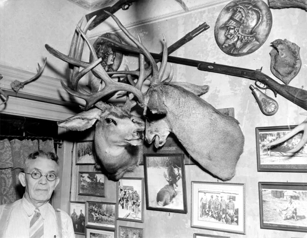 """H. H. Zietz, originator and operator of the Buckhorn Exchange restaurant, poses near taxidermied deer heads, guns, and pictures, Denver, Colorado. Zietz was also known as """"Shorty Scout."""" Between 1930 and 1940. (Harry Mellon Rhoads/Denver Public Library/Western History Collection/Rh-1038)  historic; denver public library; dpl; archive; archival; denverite"""