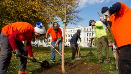 Denver Day Works' first crew plants a tree in Civic Cneter Park. (Kevin J. Beaty/Denverite)  homeless; day labor; social work; kevinjbeaty; denverite; denver; colorado; kevinjbeaty;