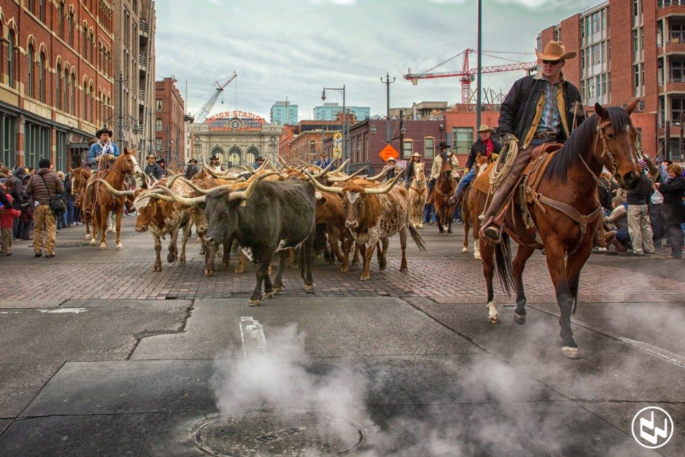 A parade to kick off the National Western Stock Show makes it's way down Denver (Courtesy of the National Western Stock Show)