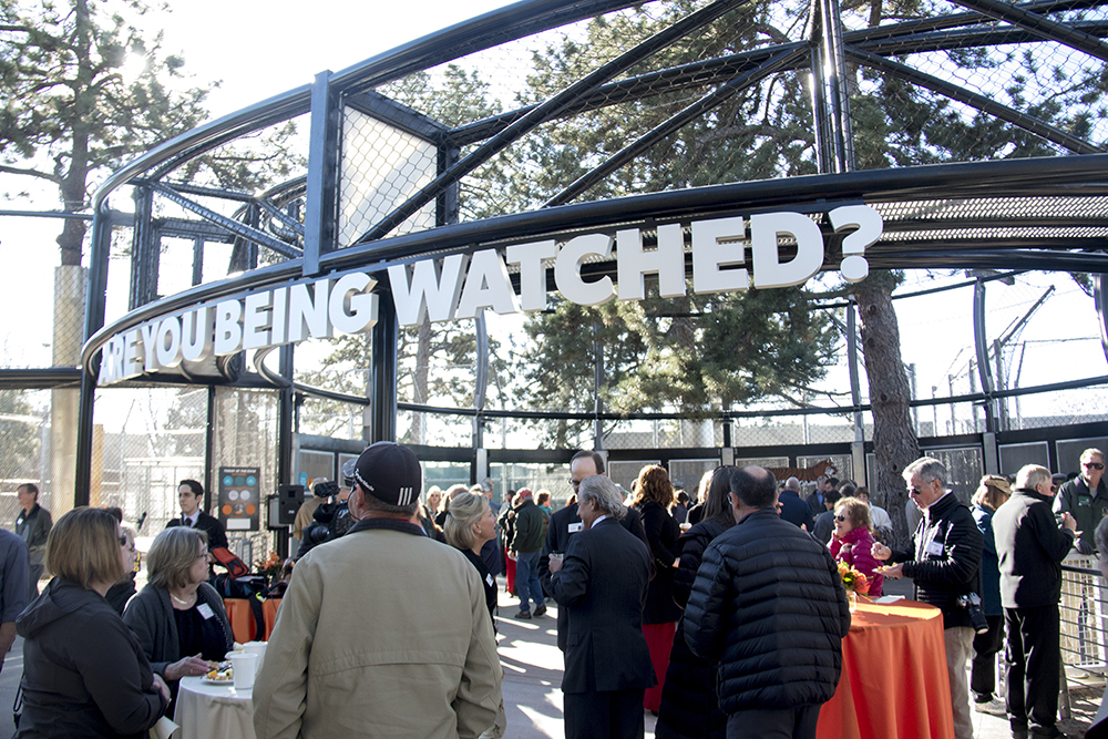 The opening of The Edge, a new tiger exhibit at the Denver Zoo. (Kevin J. Beaty/Denverite)  animals; denver zoo; tigers; kevinjbeaty; denver; denverite; colorado;