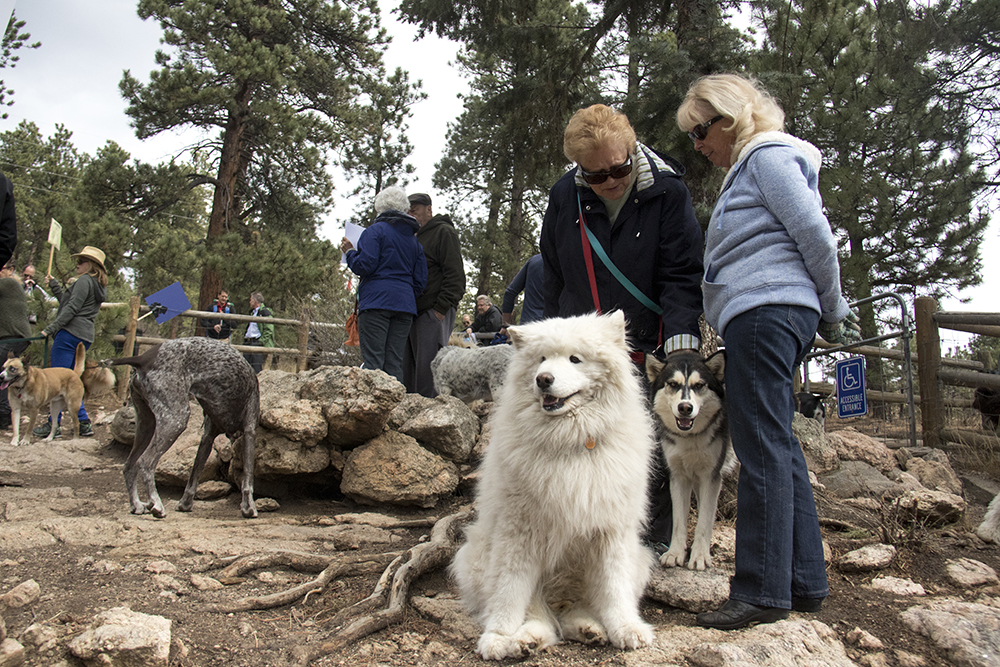 Mary BEth Fuss (left) and Colleen Condon stand with their dogs Jack (left) and Greta at Elk Meadow Dog Park, March 30, 2017. (Kevin J. Beaty/Denverite)  elk meadow dog park; evergreen; colorado; kevinjbeaty; parks; denverite;