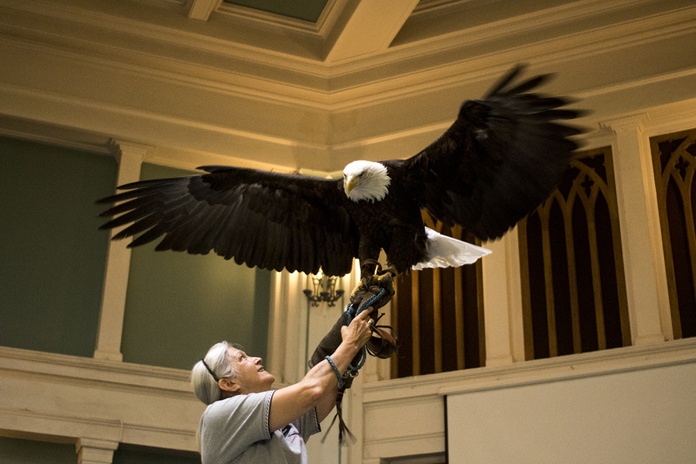 Barbara Walton holds an 8-year-old bald eagle on stage for a special Earth Day Sunday service. The Althea Center for Engaged Spirituality. (Kevin J. Beaty/Denverite)  althea center; church; cheesman park; denver; colorado; kevinjbeaty; denverite;