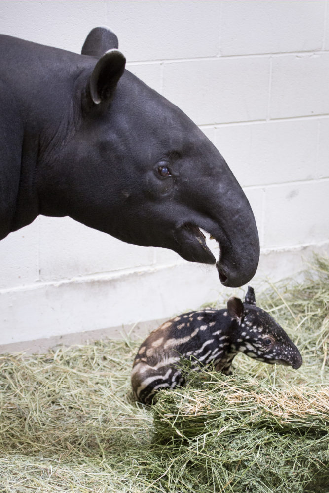 Rinny and Umi. (Courtesy of the Denver Zoo)
