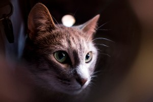 Elaia the brewery cat visits Wynkoop brewery, Aug. 30, 2017. (Kevin J. Beaty/Denverite)   beer; brewery; denver; colorado; brewery cat; pets; animals; nightlife; denverite; kevinjbeaty;