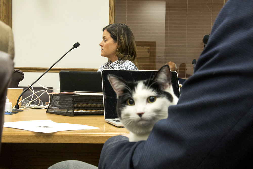 Councilwoman Kendra Black and Councilman Jolon Clark's cat Kit during a Denver City Council committee meeting on proposed legislation banning declawing, Oct. 25, 2017. (Kevin J. Beaty/Denverite)   city council; denver; colorado; denverite; cats; declawing; kevinjbeaty