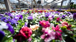 "The City Floral Garden Center is open and will remain open even during Mayor Hancock's ""shelter in place"" order because it sells agricultural goods. March 24, 2020. (Kevin J. Beaty/Denverite)"