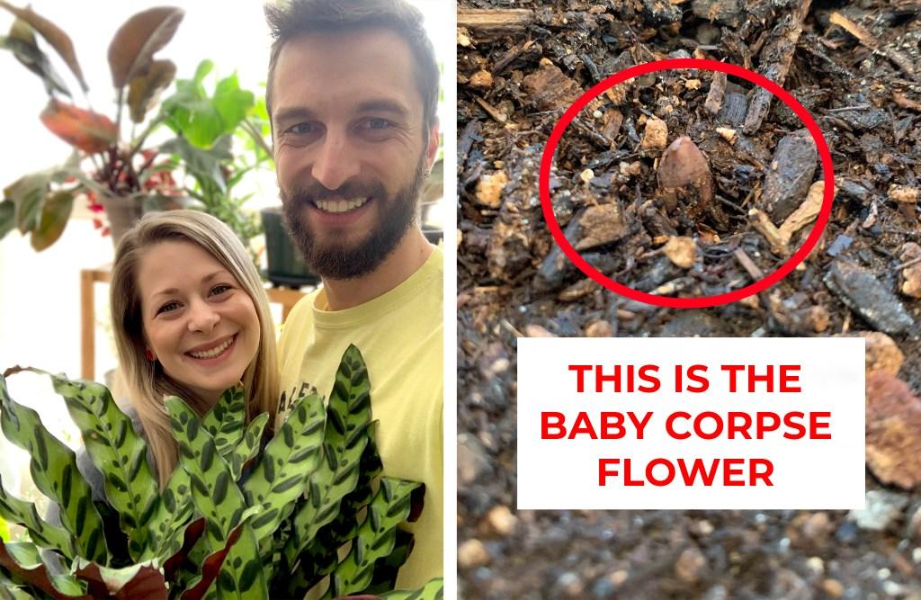 Elizabeth Petrossian, Adam Hamilton and their baby corpse flower. (Courtesy: Adam Hamilton)