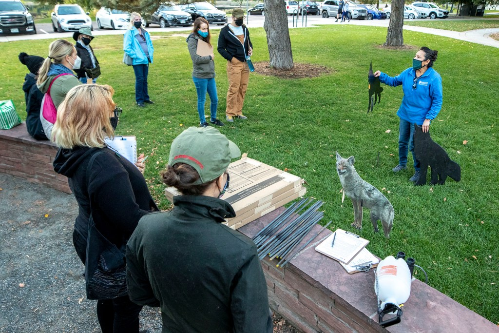 Vicki Vargas-Madrid, administrator of Denver's wildlife program, trains volunteers how to set and maintain coyote cutouts meant to scare geese. Sept. 28, 2020.