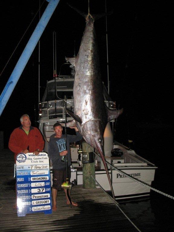 Giant Swordfish New Zealand Swordfish 891 Record