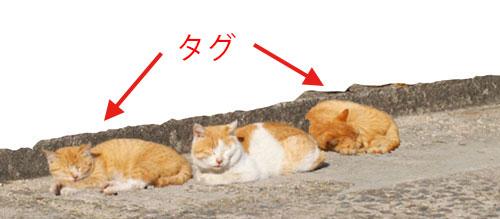 タグイメージの猫
