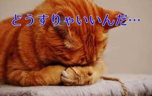 思い悩む猫