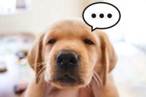 困った犬の顔