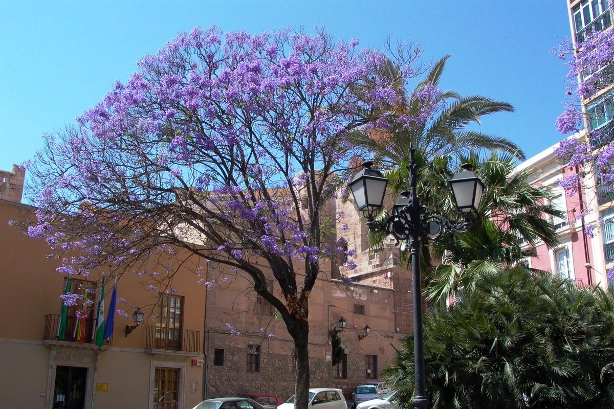 CasasEva_Rodalquilar_Region_Almeria